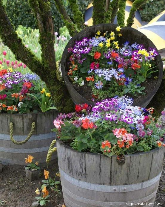 Любительские цветов на даче