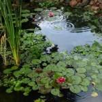 171243_ogrod_oczko_wodne_rosliny_wodne_kwiaty