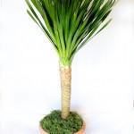 Arborea-Lg-671x900