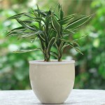 Rare-Silver-Heart-Lucky-Bamboo-Seeds-Absorb-Dust-Tree-Seeds-Anti-Radiation-font-b-Dracaena-b