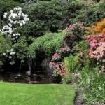 piekne-ogrod-wodne-kwitnace-oczko-krzewy-460x378
