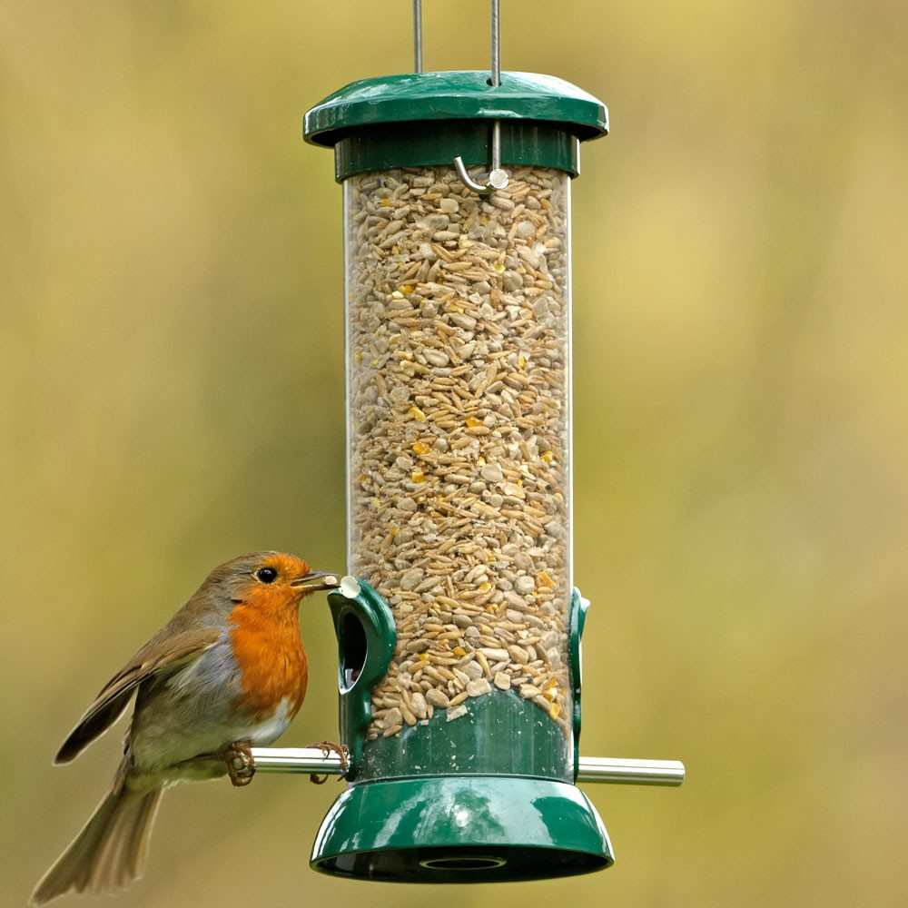 Птицы зимующие в ярославле картинки с названиями фотографии