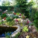 wodne-kamienie-kwiaty-oczko
