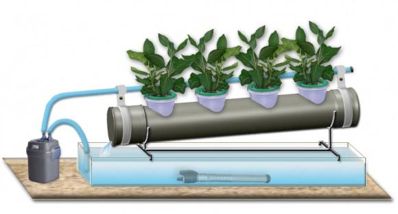 Посадка и выращивание семян