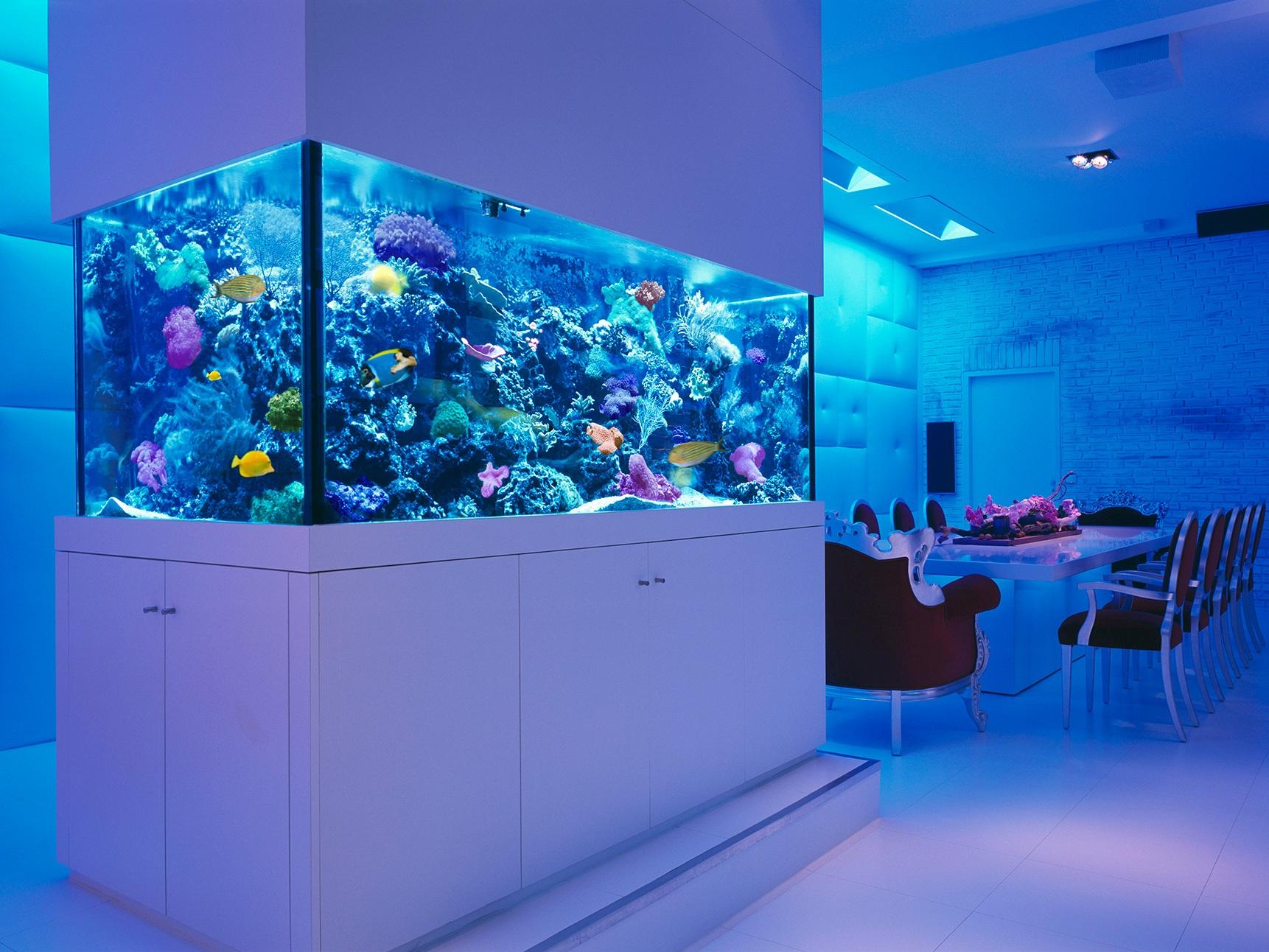 идея маленького встроенного в пол аквариума