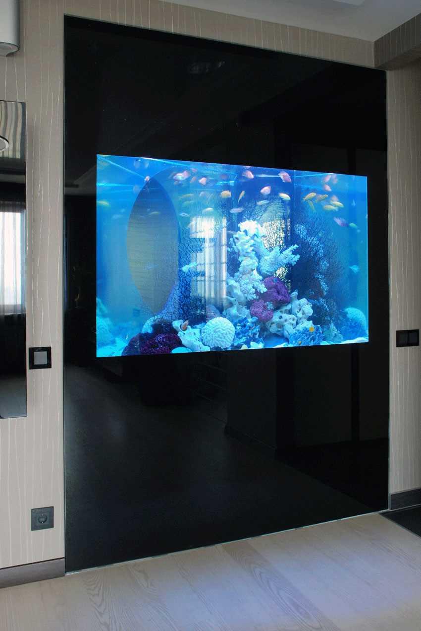 идея маленького встроенного в стену аквариума